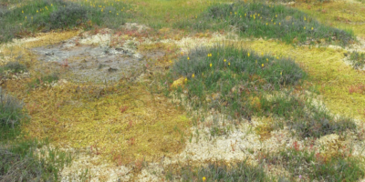 Cost Benefit Analysis of Biodiversity Conservation Proposals for Littleton Labyrinth
